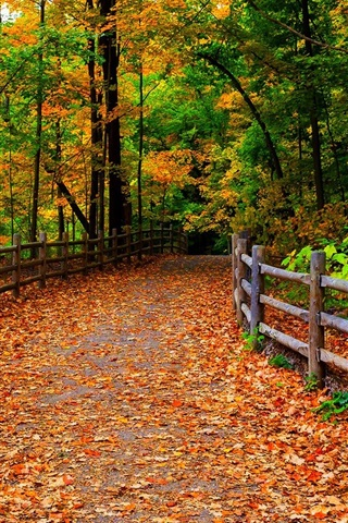 Park Nature Forest Trees Leaves Path Autumn 640x1136