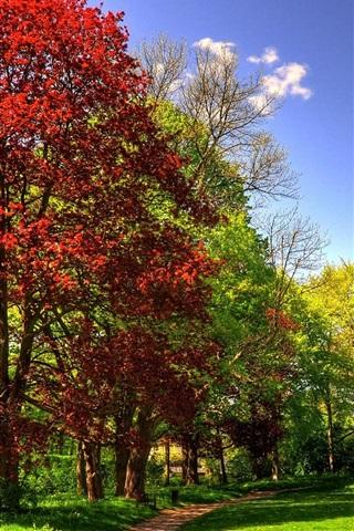 iPhone Wallpaper Park, trees, grass, sunny, autumn