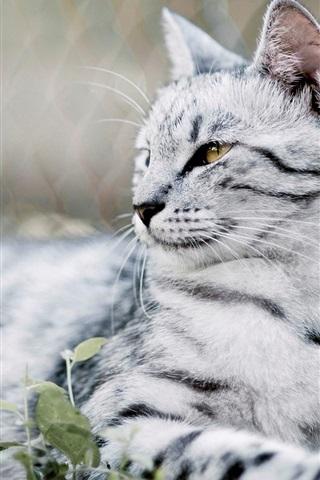 iPhone Wallpaper Cute cat, mustache, eyes, blur background