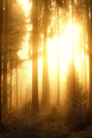 iPhone Wallpaper Misty forest, trees, sun rays