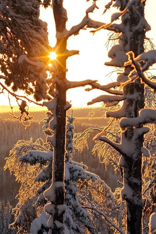 iPhone Wallpaper Winter forest, thick snow, sun rays, Finland