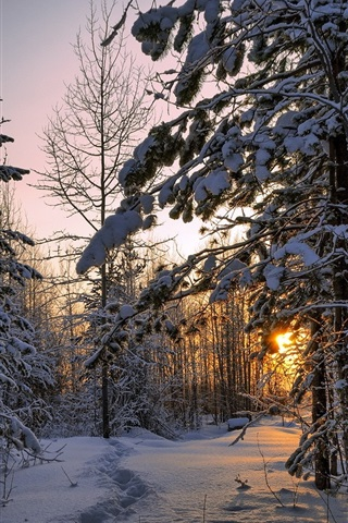 iPhone Wallpaper Winter, forest, thick snow, trees, sunset