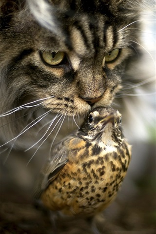 iPhone Wallpaper Cat and bird, bokeh
