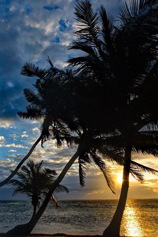 iPhone Wallpaper Coast, palm trees, sunset, tropics