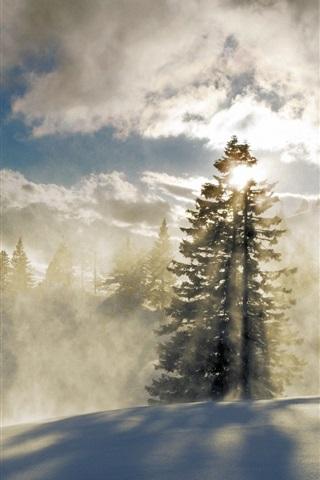 iPhone Wallpaper Forest, snow, winter, mountains, fog, clouds, sun