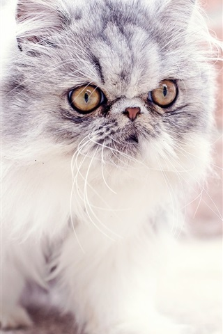 iPhone Wallpaper Furry kitten, baby, look, eyes, cute