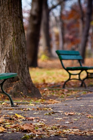 iPhone Wallpaper Park, walkway, bench, trees, autumn