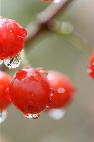 iPhone Wallpaper Red cherry, berry, water drops, rain, bokeh
