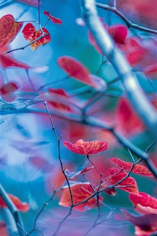 iPhone Wallpaper Red leaves, twigs, autumn, blur background