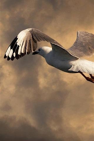 iPhone Wallpaper Seagull flight, clouds, dusk