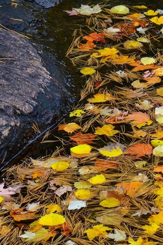 iPhone Wallpaper Stream, stone, water, leaves, autumn