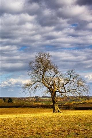 iPhone Wallpaper Tree, field, clouds
