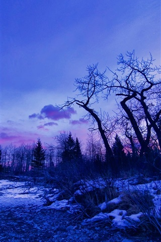 iPhone Wallpaper Winter, dawn, glow, trees, snow, lake