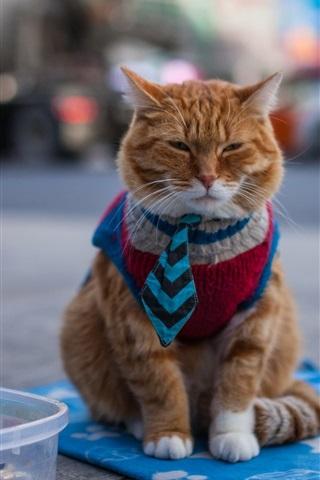 iPhone Wallpaper Cat at street, begging
