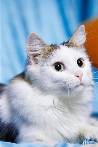 iPhone Wallpaper Cute pet, kitten, cat, white black, eyes