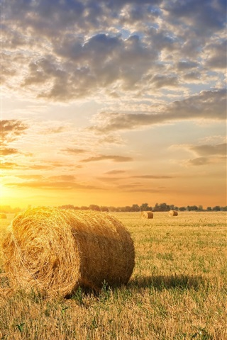 iPhone Wallpaper Farm field, grass, hay, sunset, clouds
