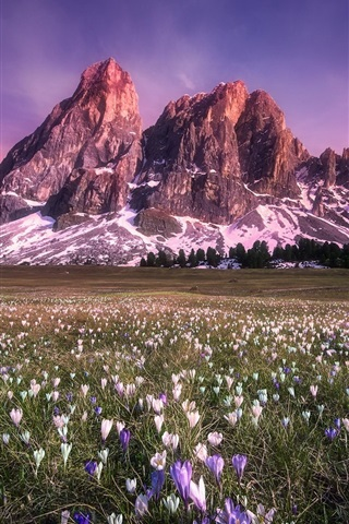 iPhone Wallpaper Flowers field, mountains, sunset, red sky