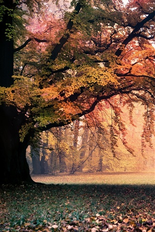 iPhone Wallpaper Golden autumn, nature, trees, leaves, fog, dawn