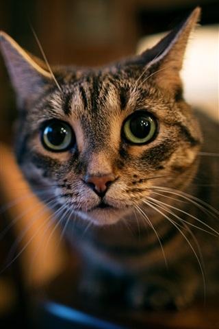 iPhone Wallpaper Green eyes cat, face, look, bokeh