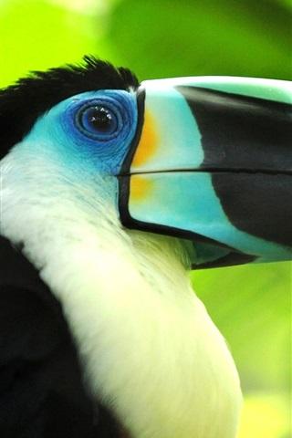 iPhone Wallpaper Bird macro photography, toucan, beak close-up