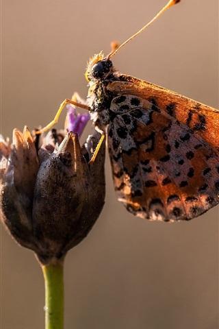 iPhone Wallpaper Butterfly, flower, wings, spots