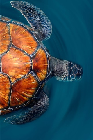 iPhone Wallpaper Canary Islands Turtle