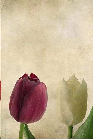 iPhoneの壁紙 カラフルなチューリップ、テクスチャ、花、紙