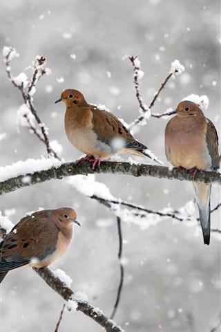 iPhone Wallpaper Five birds, mourning doves, twigs, snow, winter, Nova Scotia, Canada