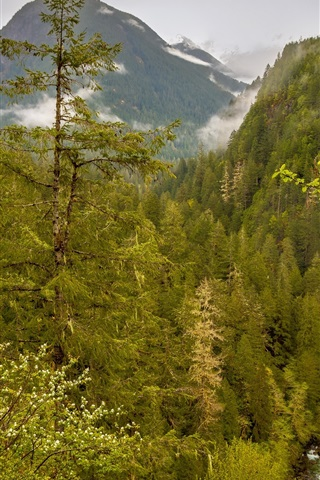 iPhone Wallpaper USA, Washington, Marblemount, forest, mountains, stream