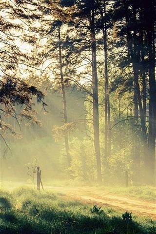 iPhone Wallpaper Beautiful nature, morning, trees, sun rays, road