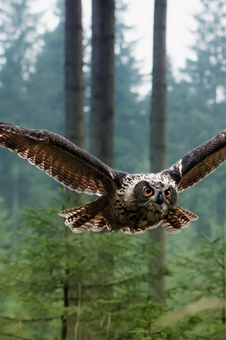 iPhone Wallpaper Birds of owl flying in the forest