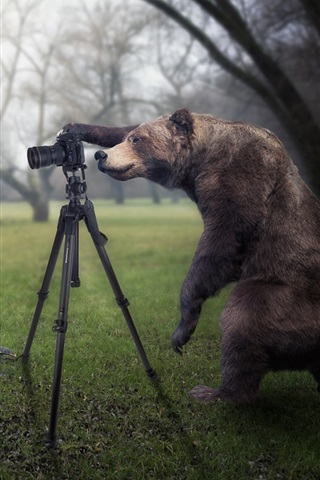 iPhone Wallpaper Creative pictures, bear is a photographer, catch moose