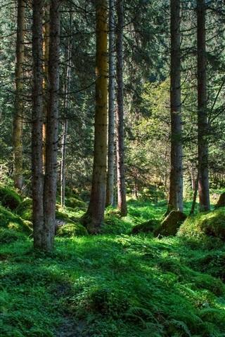 iPhone Wallpaper Forest, trees, grass, moss