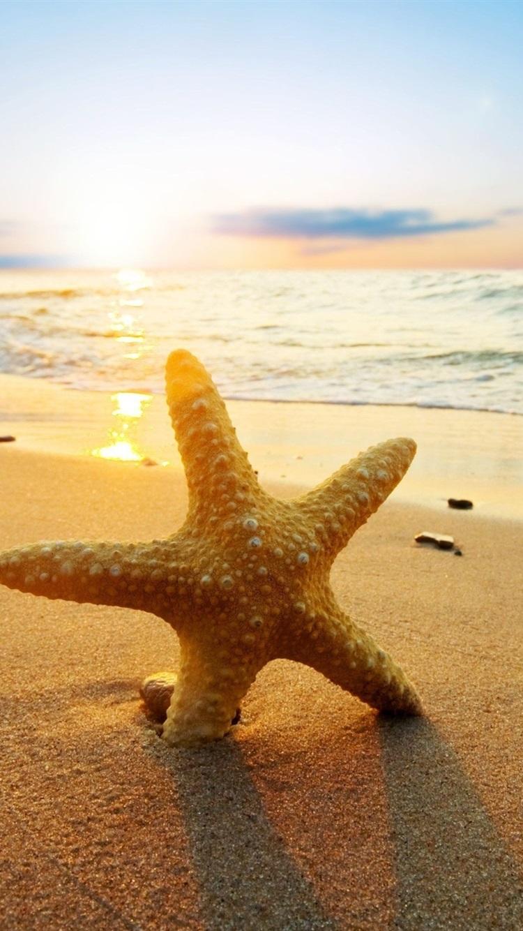 Starfish At Sunset Beach Sea Sun 750x1334 Iphone 8 7 6 6s