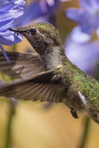 iPhone Wallpaper Suck honey hummingbird, hovering, blue flowers