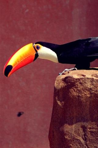 iPhone Wallpaper Toucan, orange beak, black feathers, stones