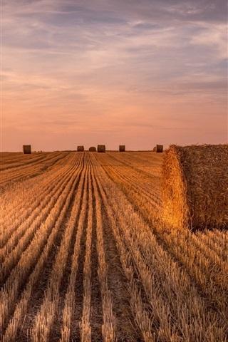 iPhone Wallpaper Wheat field, hay, summer, sunset