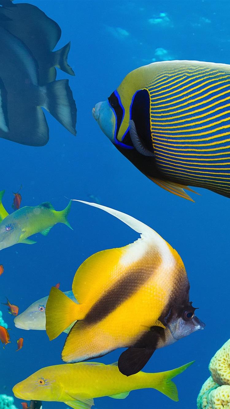 Wallpaper Beautiful Fish In The Sea Underwater Coral