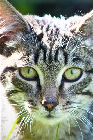 iPhone Wallpaper Cute kitten in the grass, green eyes