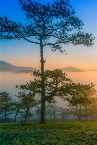 iPhone Wallpaper Dawn nature scenery, morning, mountains, pine trees, fog, sunrise