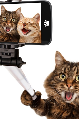 iPhone Wallpaper Funny animals, cat selfies, happy