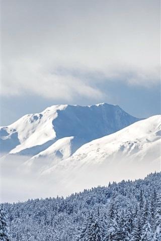 iPhone Wallpaper Kenai Mountains, trees, thick snow, Chugach National Forest, Alaska, USA