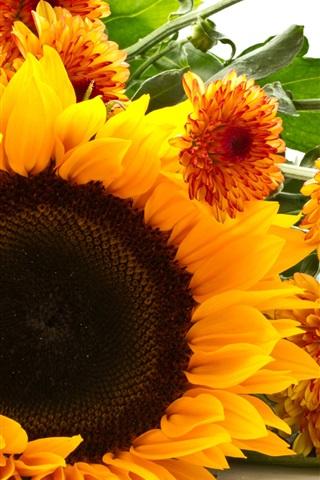 iPhone Wallpaper Sunflower and chrysanthemum, yellow flowers