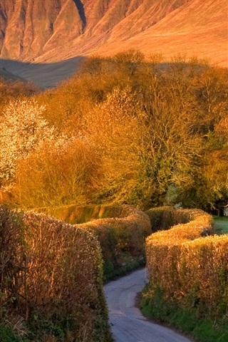 iPhone Wallpaper Trees, road, mountains, Brecon Beacons, Wales, UK