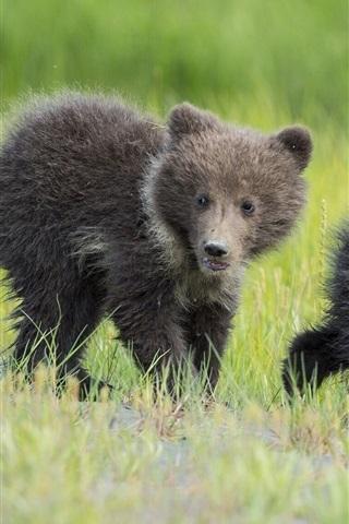iPhone Hintergrundbilder Zwei Bären, junge, Kinder, Gras