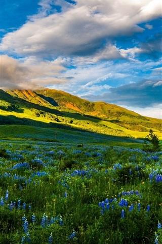 iPhone Wallpaper USA, Colorado, beautiful nature, mountains, meadows, flowers