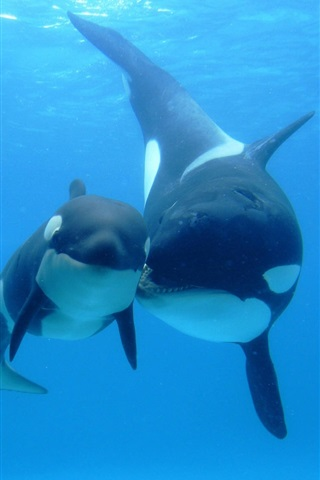 iPhone Wallpaper Whales, underwater, sea, mother and child