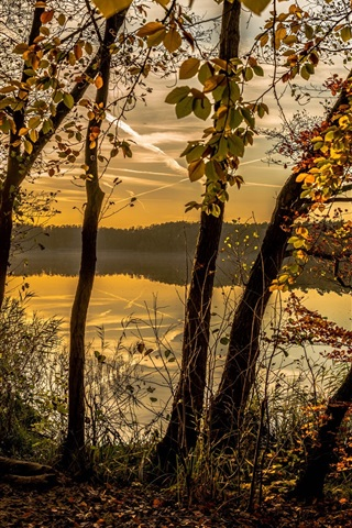 iPhone Wallpaper Autumn, forest, trees, lake, clouds, dusk