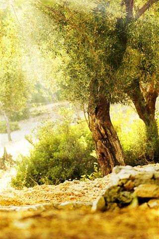 iPhone Wallpaper Beautiful summer, trees, sunshine