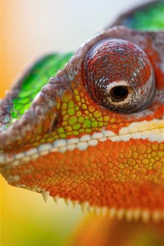 iPhone Wallpaper Chameleon head close-up, bokeh